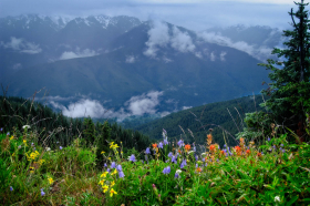 Hurricane Ridge, Olympic National Park, WA