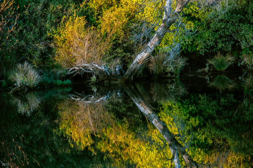 Tree Trunk: Sacramento River