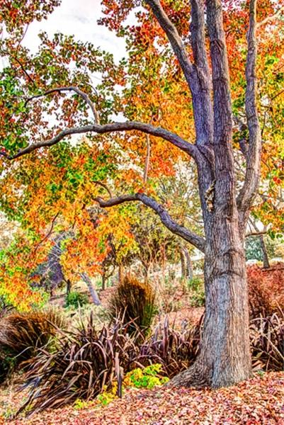 Autumn at Heather Farm Garden Center - Walnut Creek, CA