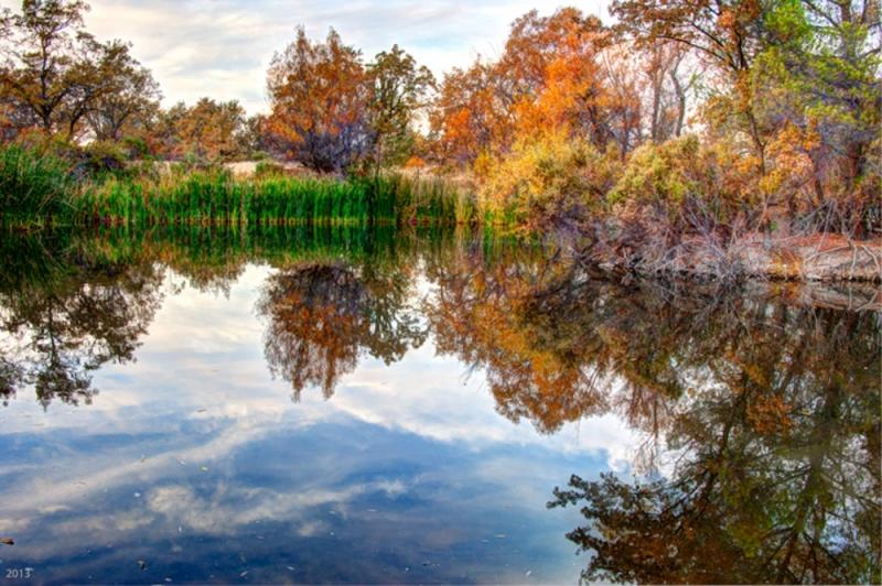 Heather Farm Park - Walnut Creek, CA