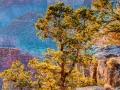 Hopi Point Early Morning - Grand Canyon NP