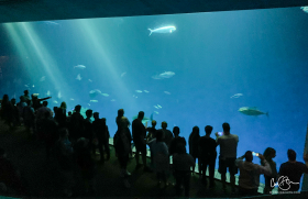 July 27: Monterey Bay Aquarium