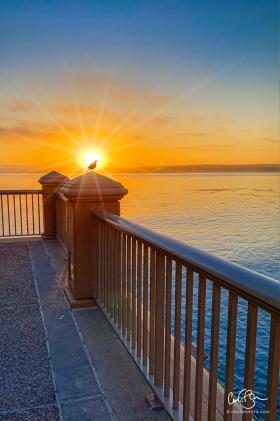 July 28: Early Bird, Monterey Bay