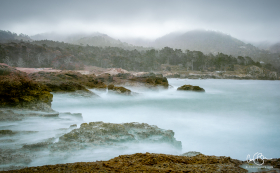 July 29: Lobos Natural Reserve, Carmel CA