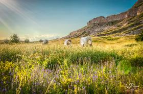 Aug 3: Oregon Trail, Scotts Bluff National Monument, Nebraska