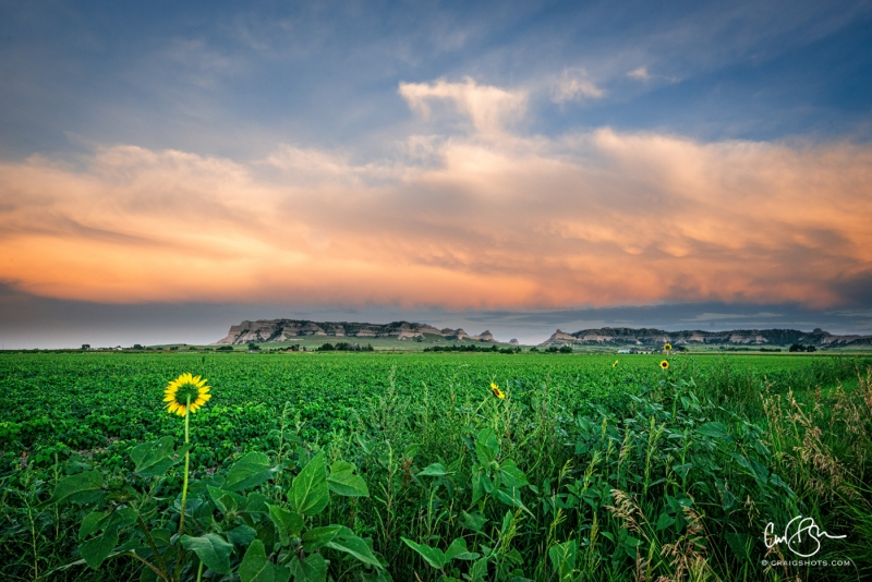 Aug 3: Lonely Sunflowers, Scotts Bluff National Monument, Nebraska
