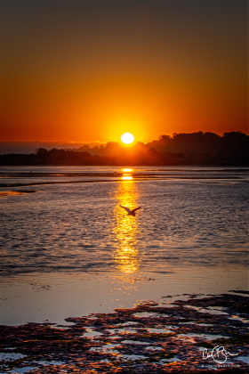 Nov 8: Sunset, Bolinas Lagoon, Bolinas, CA