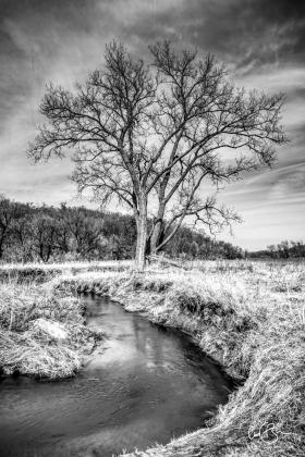 Mar 28: Stream Along County T, Iowa County WI