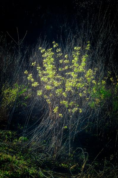 Spring_Summer-1
