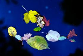 leavesonwater1