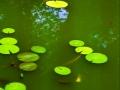 Indiana pond1