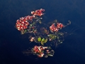 FloatingBunch_A_100504_4813
