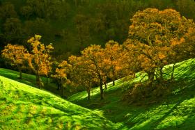 Diablo trees1a_0396