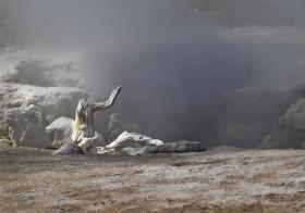Yellowstone_080908_0483