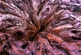 Driftwood_B_052402