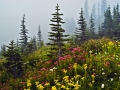 Firs+flowers_060816_8499