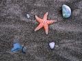 Starfish_A_052402