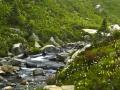 CreekWildflowers_060816_8546