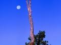 TreeandMoon2_0601
