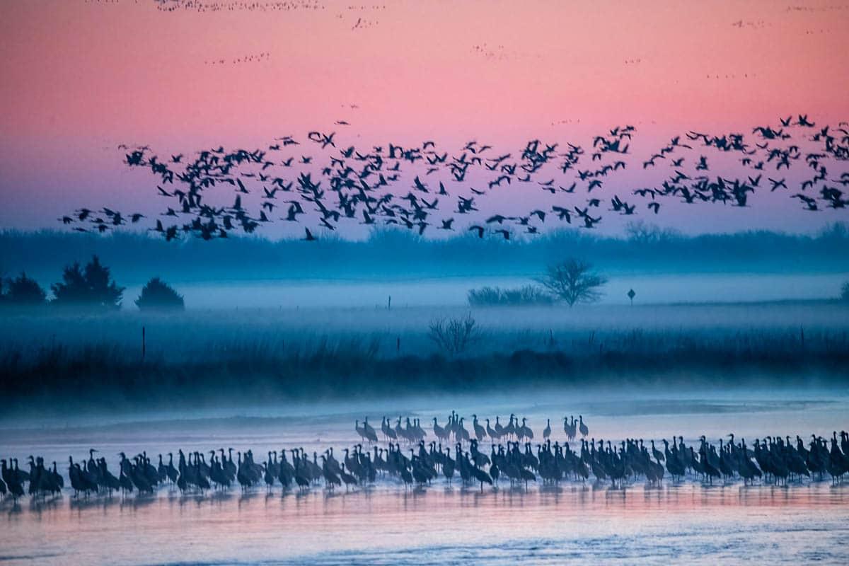 Cranes_2021-4634