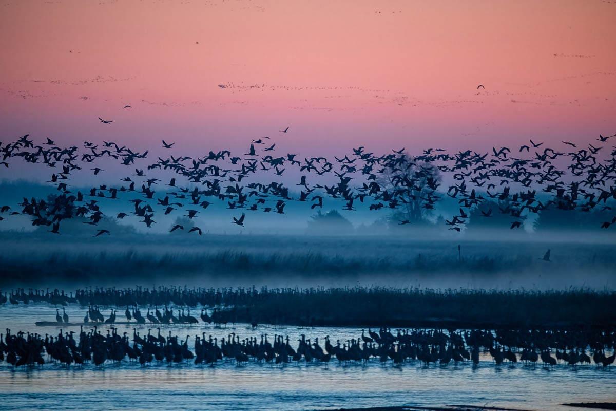 Cranes_2021-4635