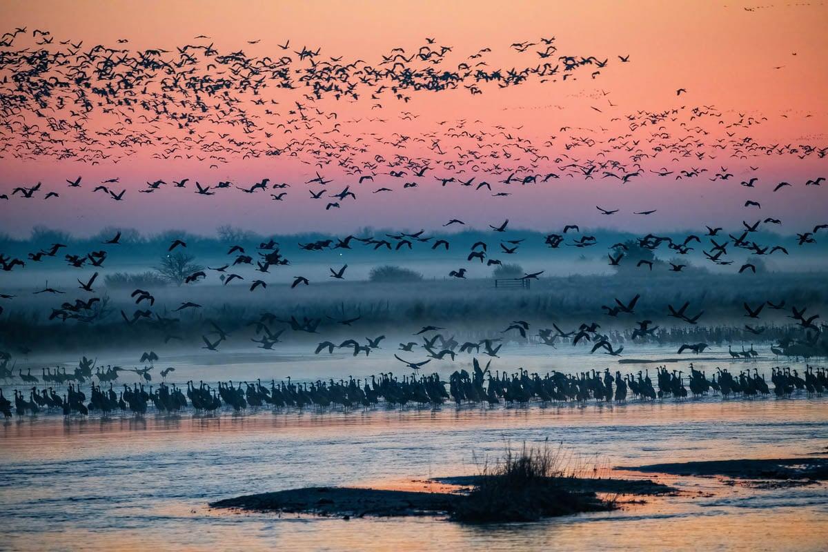 Cranes_2021-4638