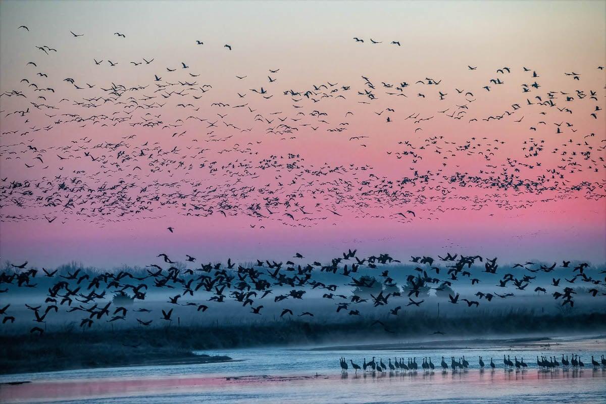 Cranes_2021-4640