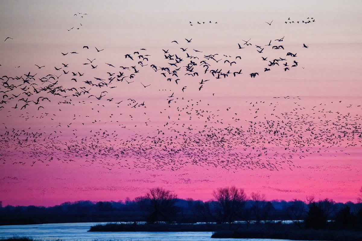 Cranes_2021-4652
