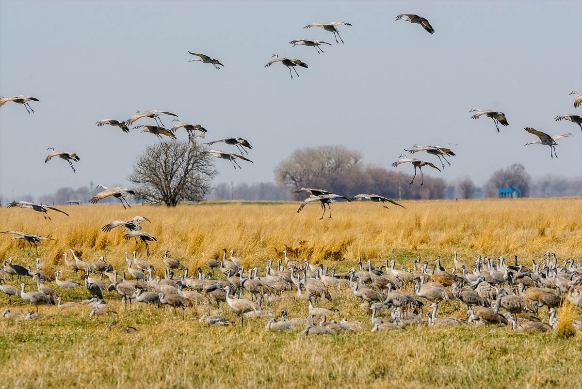 CranesLanding-4709