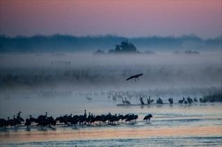 Cranes_2021-4642