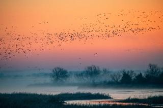 Cranes_2021-4644