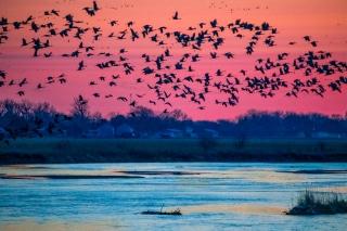 Cranes_2021-4646