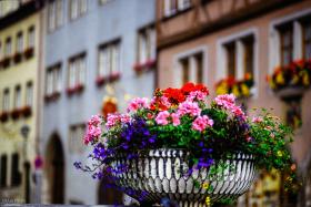 Rothernburg odT flowers