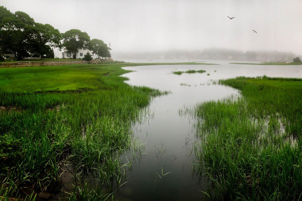 Salt Marsh in Fog