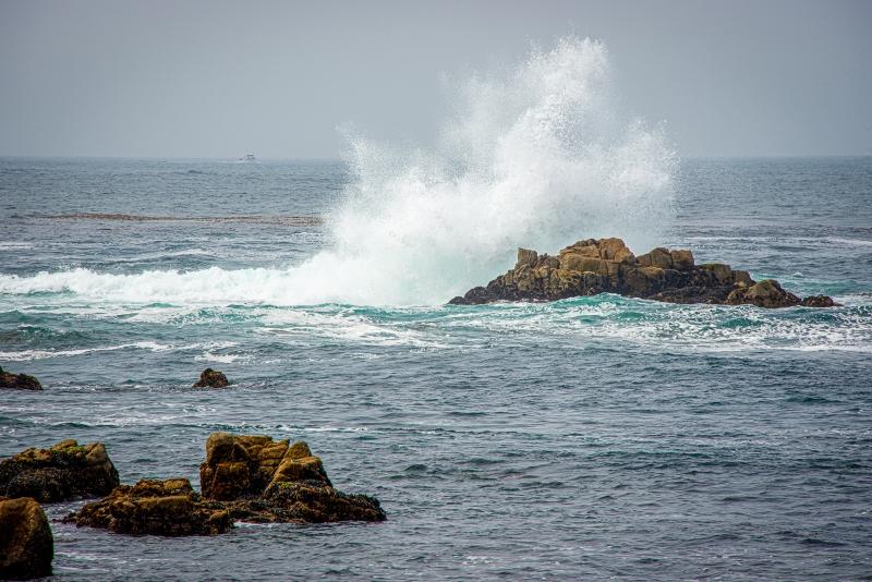 PGrove-Monterey--2.jpg