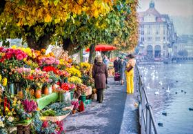 Flower Market - Luzern