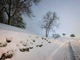 SnowyMorning_3979