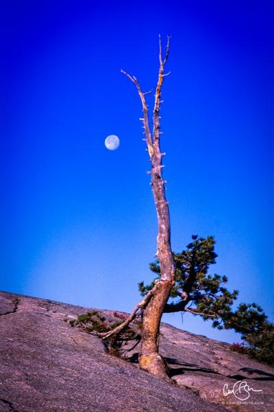 Yosemite_2001-11.jpg